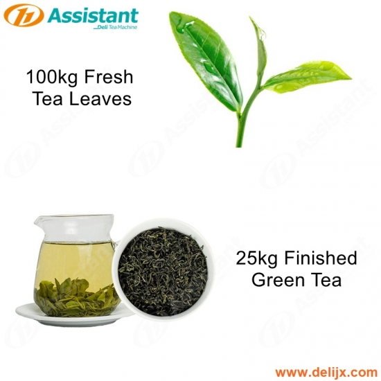 25kg Finished Green Tea 100kg Fresh Green Tea Processing Production Machine