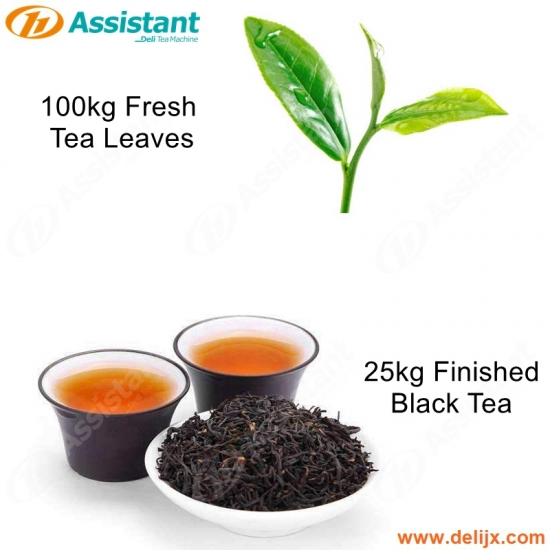 100kg Fresh Tea Leaves Processing Machine For 25kg Finished Black Tea